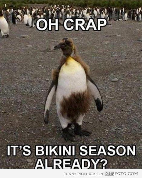 bikini penguin